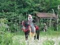 equestrian_12